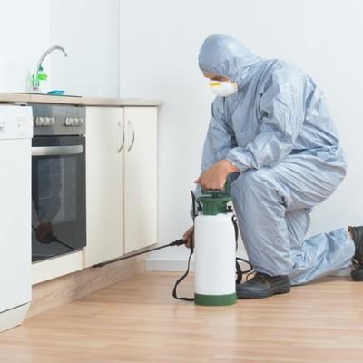 Control de plagas en el hogar