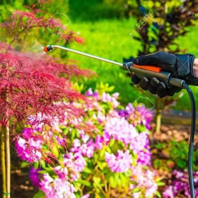 Control de plagas en el jardín