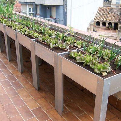 Terraza de cultivo