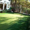 Green Golf 4