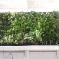 Jardín vertical en una terraza