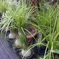Plantas de Ornato