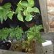 Instalación de muros verdes hidroponicos