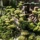 Empresas Jardineros - Jardines Felviogran