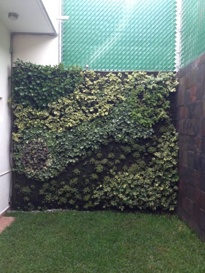 Creacion de un jardin vertical