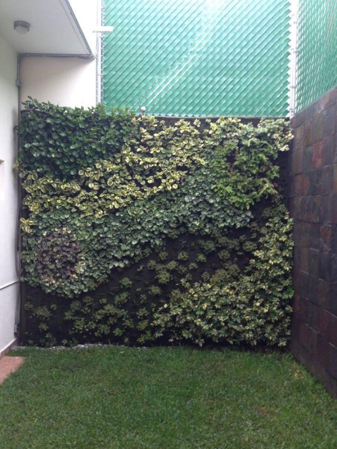 Foto creacion de un jardin vertical de centro jardinero for Creacion de jardines