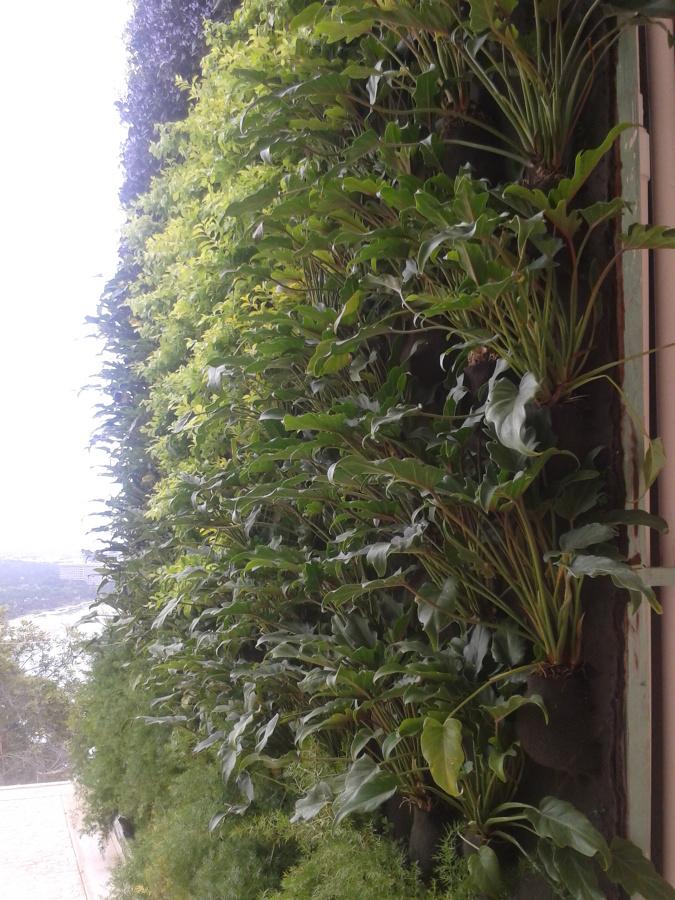 detalle de jardin vertical