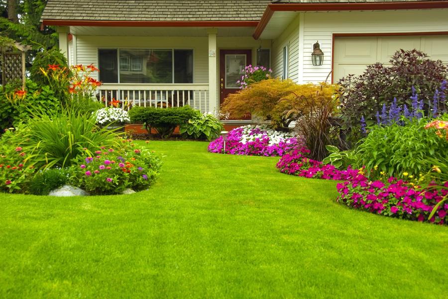 color jardineria