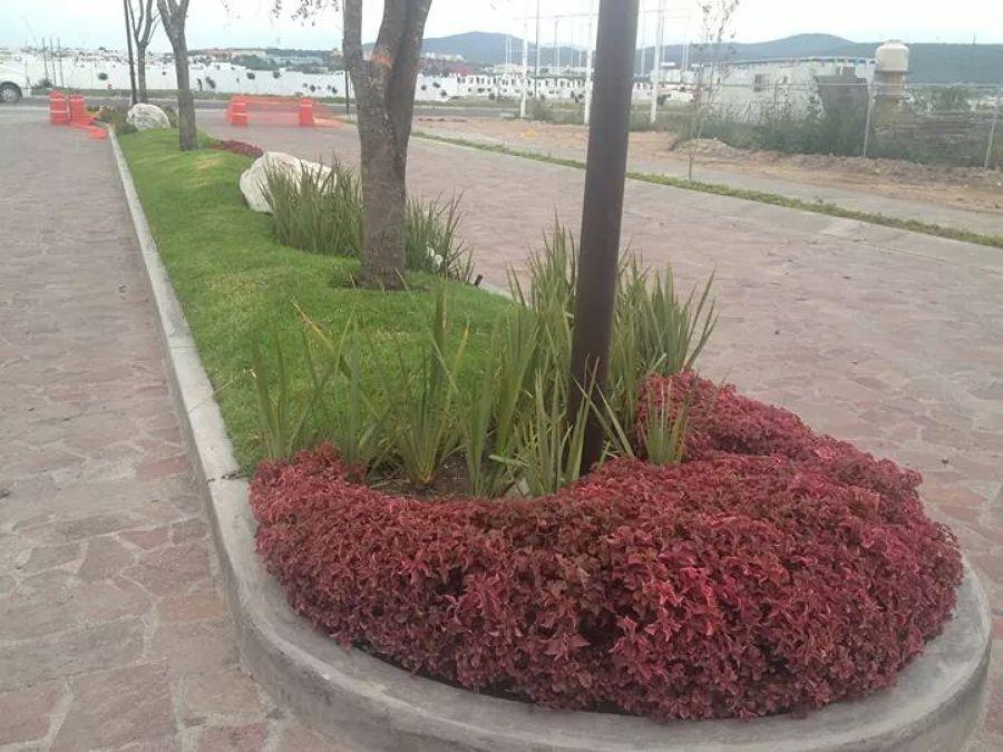 Foto jardinera de entrada de fraccionamiento de dise o y for Jardineria queretaro