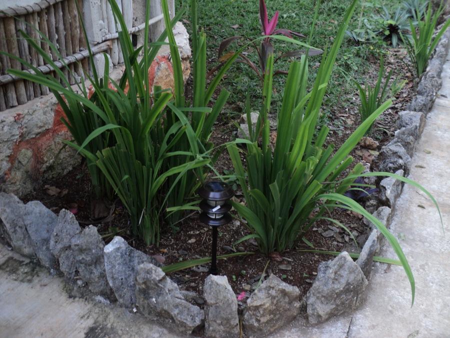 Jardineria y fumigación