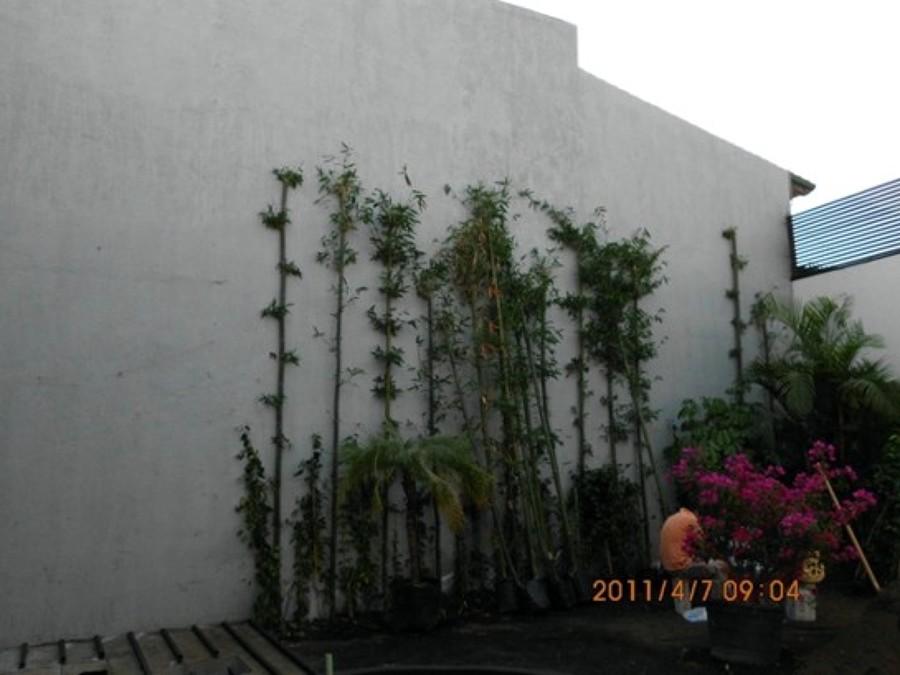 Muro ImpermeabilizadoMuro impermeabilizado listo para enredadera.