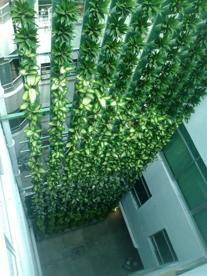Foto muro verde en edificio habitacional m schultz de for Muros verdes en mexico