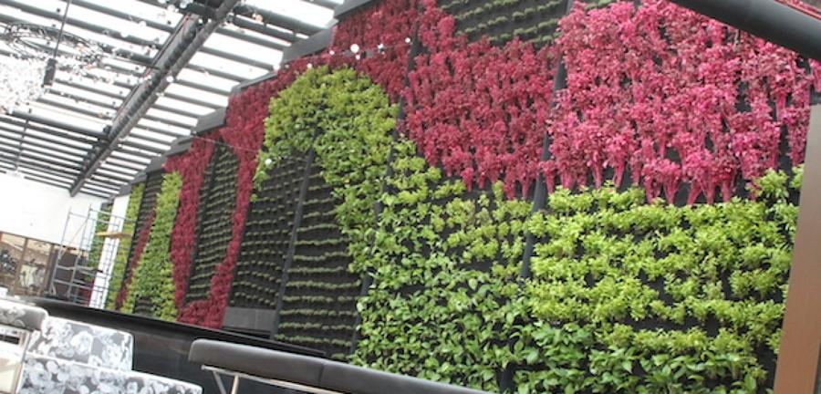 Foto muro verde natural de grupo zykma 76568 habitissimo - Como hacer un muro verde ...