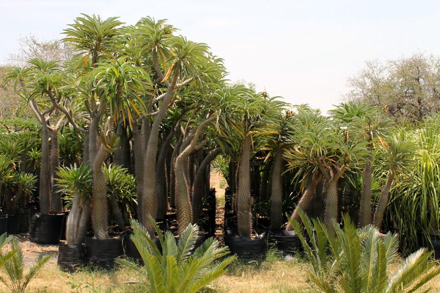 Foto nuestro vivero 5 de las palmas vivero 8980 for Vivero las palmas