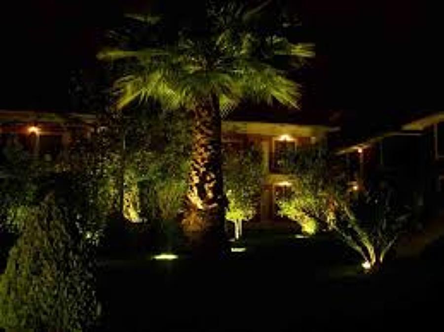Foto palmera de av iluminaci n 88077 habitissimo for Iluminacion para palmeras