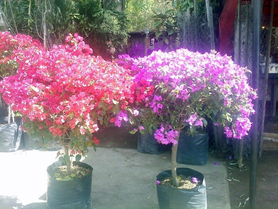 foto plantas de ornato de jardineria la encantada