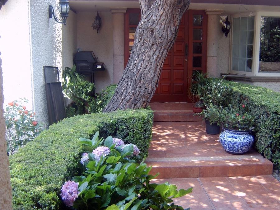Foto setos de arrallanes de jardineria lopez 13143 for Jardineria queretaro