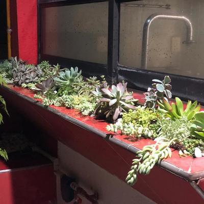 Suculentas en Jardinera de Ventana