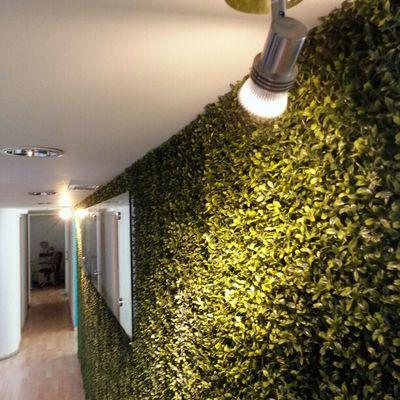 Diseño e Instalación de Muro Ecologico