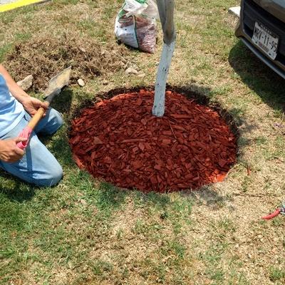 Colocación de mulch