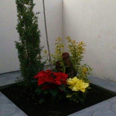 Jardin en patio trasero
