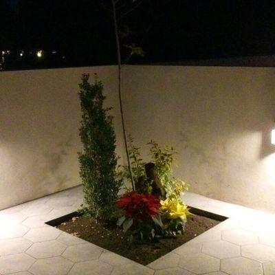 Jardin en patio trasero de noche