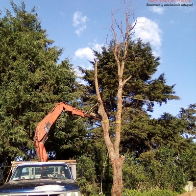 Replantando un árbol