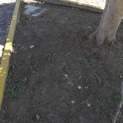 Piedras en jardineras