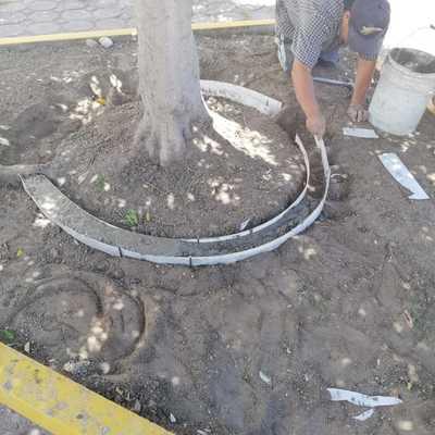 Delimitación de base de árboles con cemento