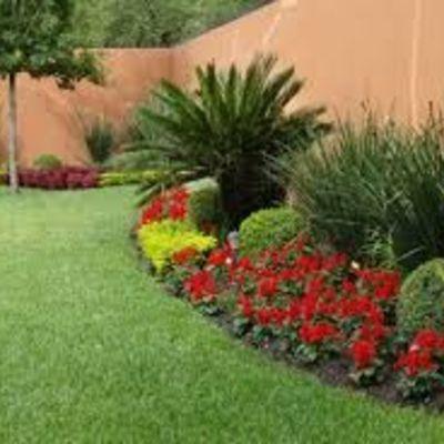 jardinera palmas y color