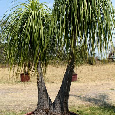 Las palmas vivero chapala for Viveros en salto