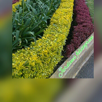 Bardas de.tras.tipos de plantas