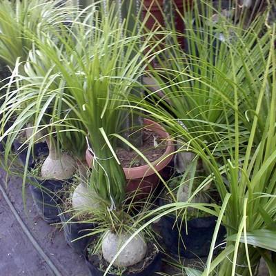 Jardineria la encantada servicio de jardineria xochimilco for Jardineros en xochimilco