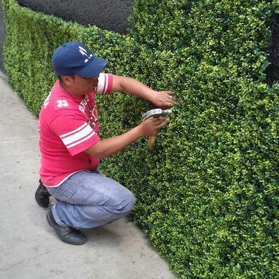 Muros verdes artificiales