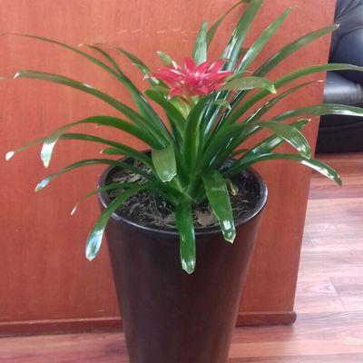 Plantas de interior y mantenimiento