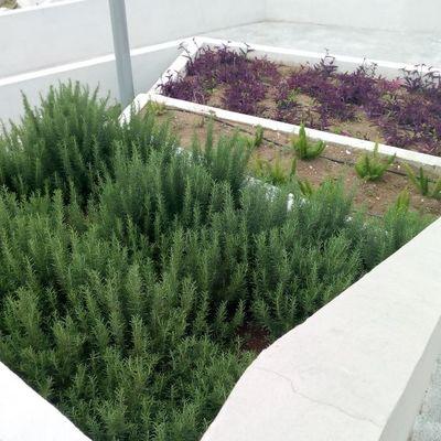 Plantas en jardineras