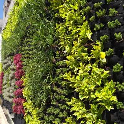 Instalación de muro verde
