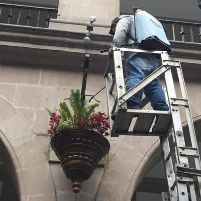 mantenimiento a plantas colgantes