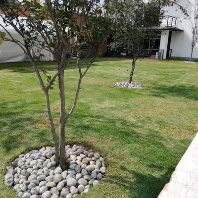 Plantado de árboles frutales en finca