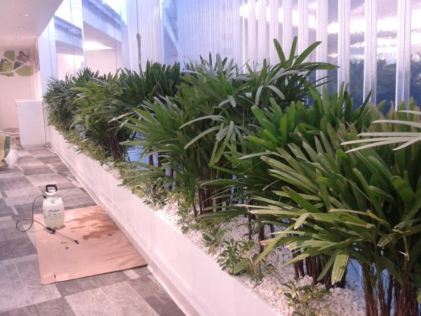 Foto jardineras con palmas rafis de centro jardinero san for Jardineras con bloques de hormigon