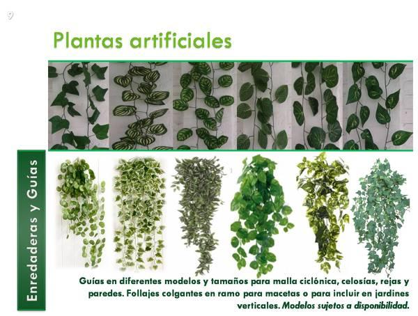 Foto muros verdes y jardines verticales de decorklass for Plantas recomendadas para jardin vertical