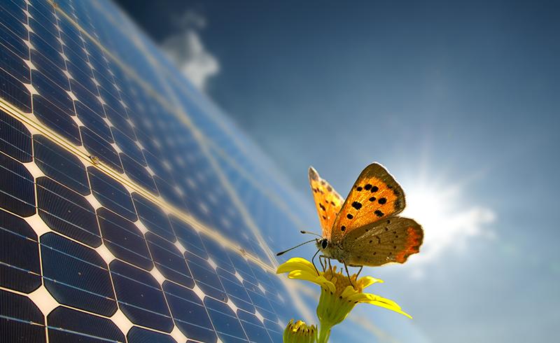 Solaire Energias Renovables Sa De Cv