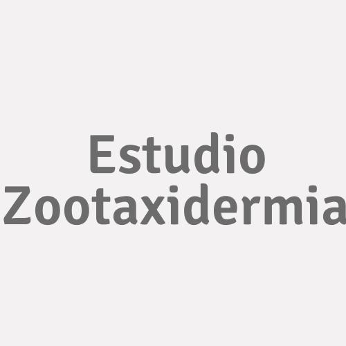 Estudio Zootaxidermia