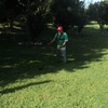 Dar mantenimiento a las áreas verdes de la institución