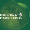 Fumigacion De Plagas En Cancun