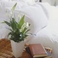 Planta con flores sobre mesa de noche