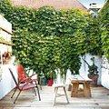 jardin-con-enredaderas-en-terraza