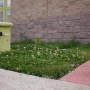 Cortar la hierva