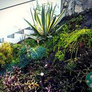 Jardin Suculento