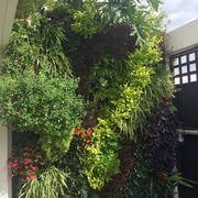 Jardín vertical en oficina